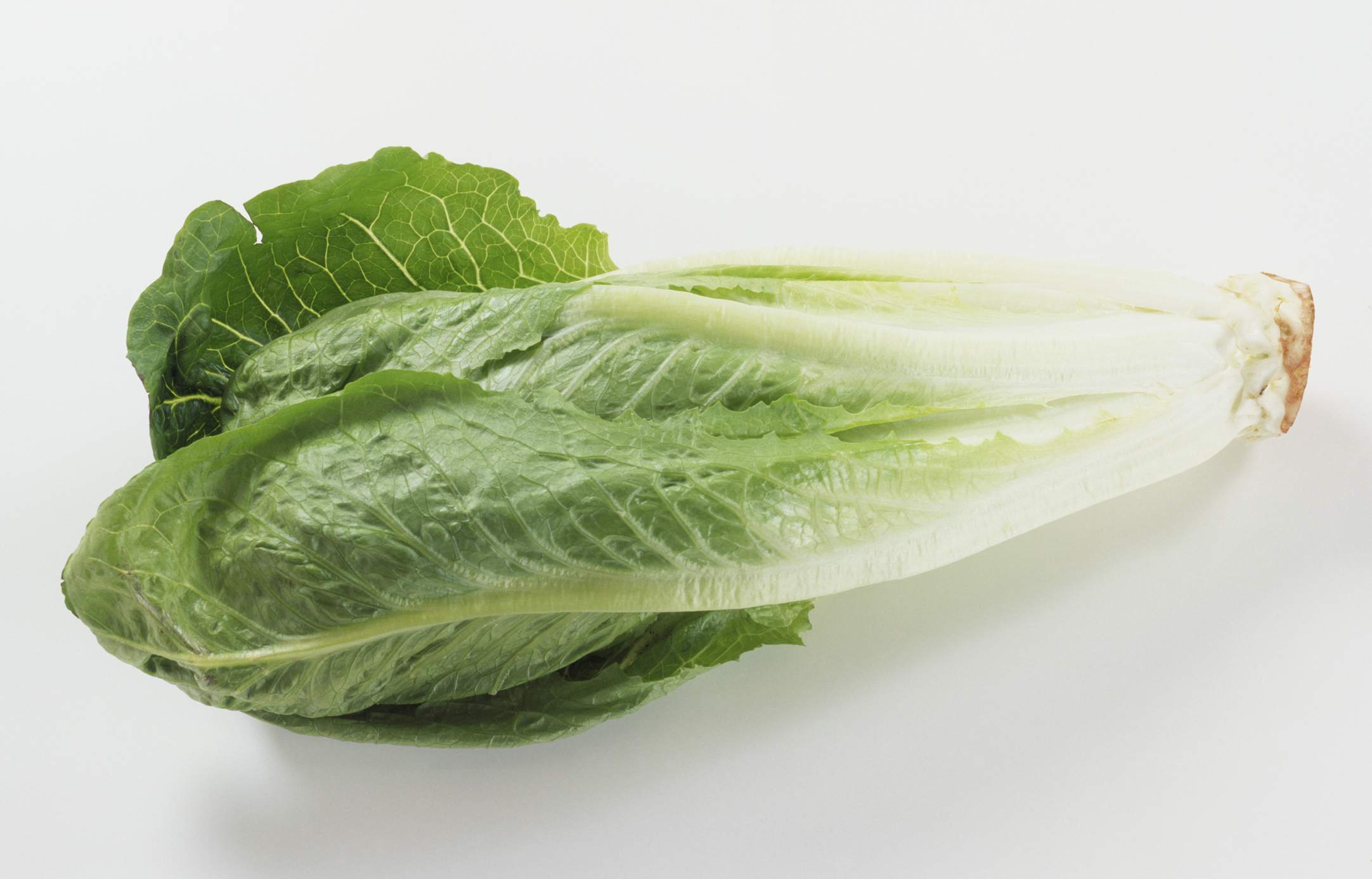 lettuce varieties 16 types of lettuce