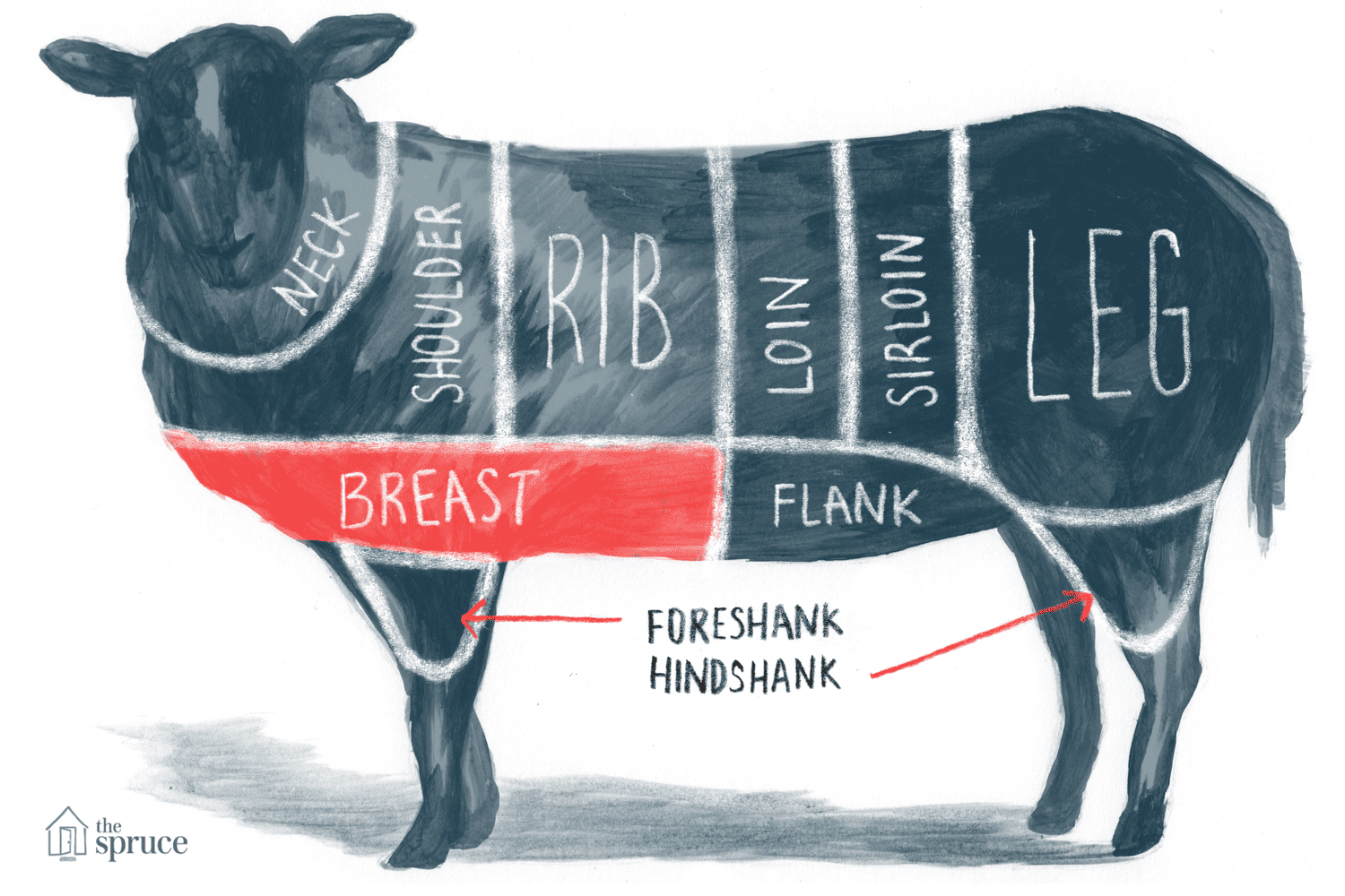 Illustrated diagram of the cuts of lamb - highlighting the breast
