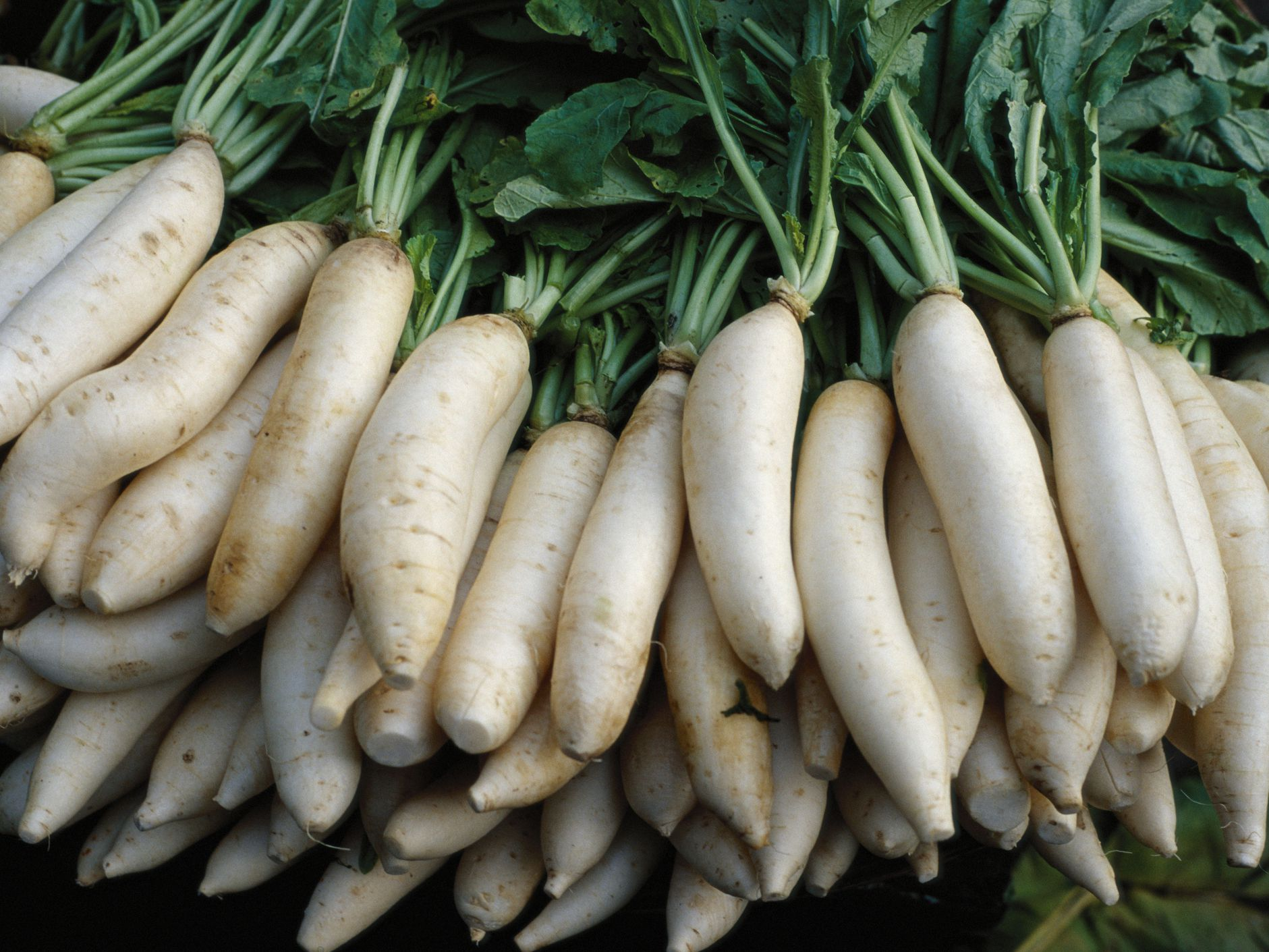 What Is Daikon Radish And How Is It Used