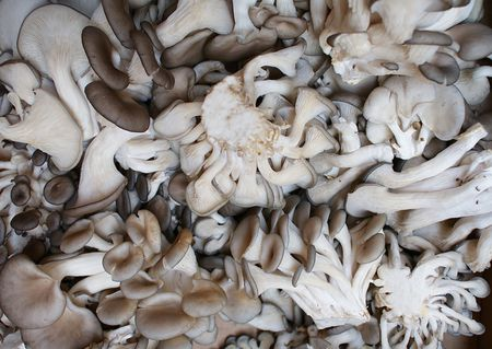 What Are Oyster Mushrooms?