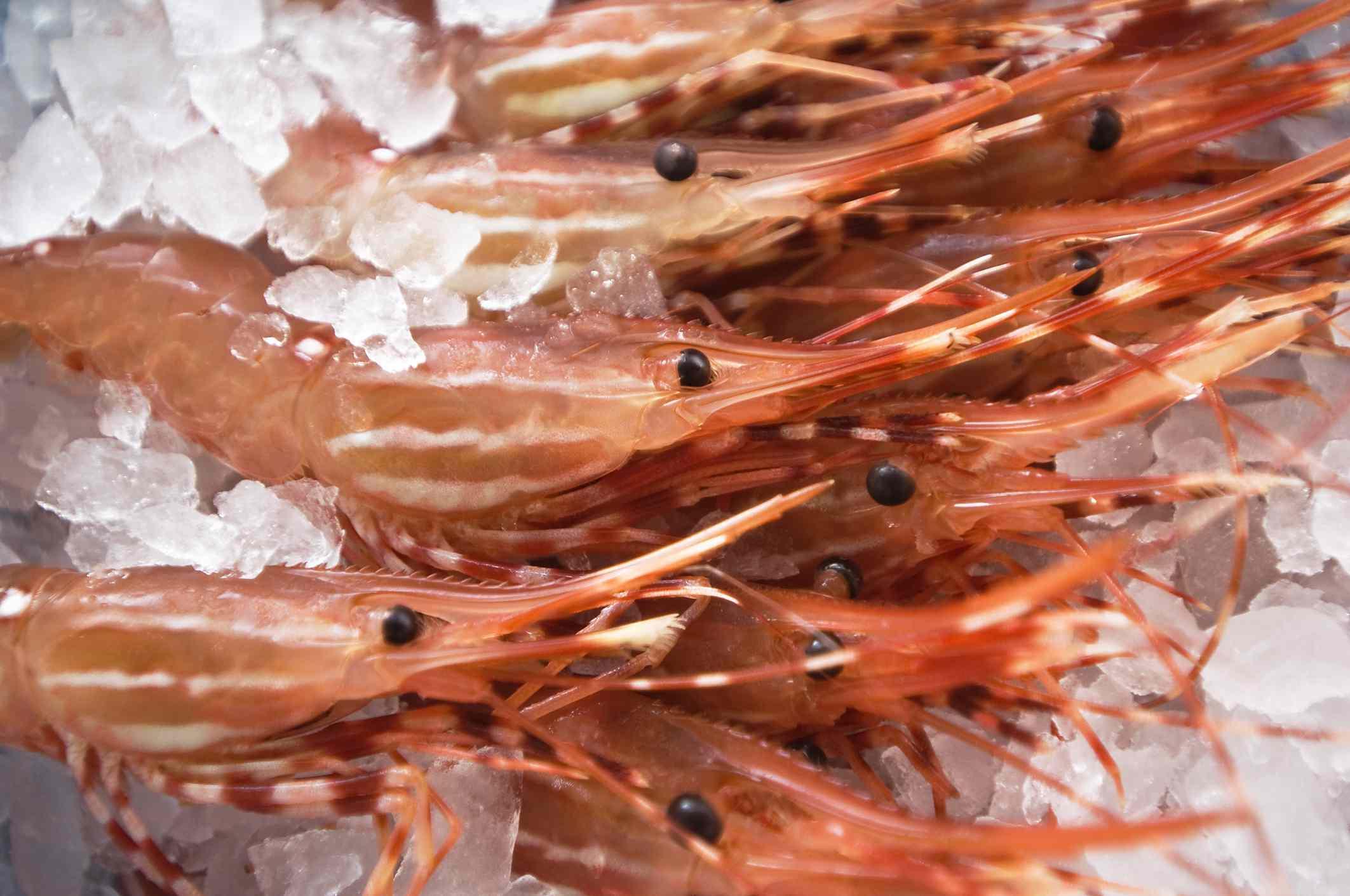 Spot prawns on ice