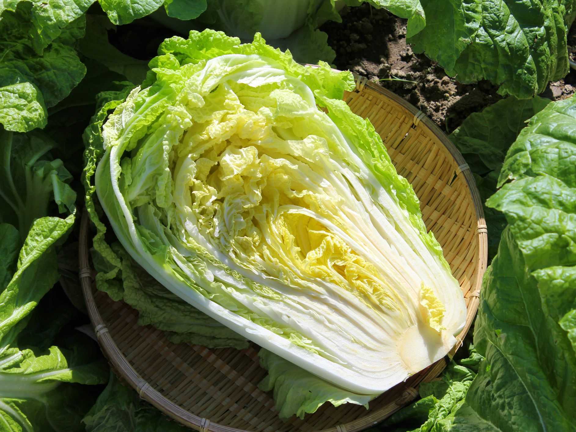 How To Cook And Eat Chinese Cabbage