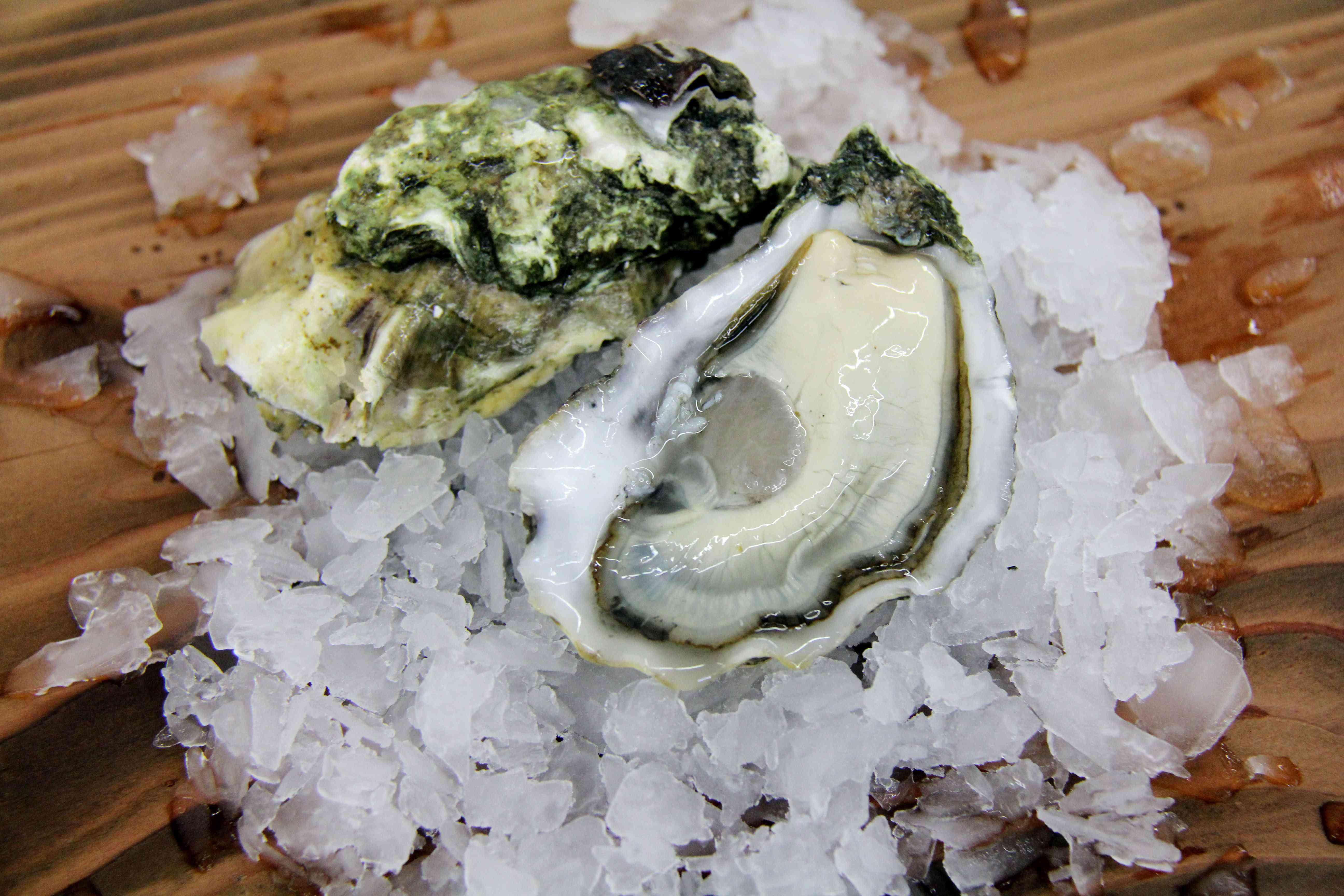 Oriana Poindexter_Catalina Oysters