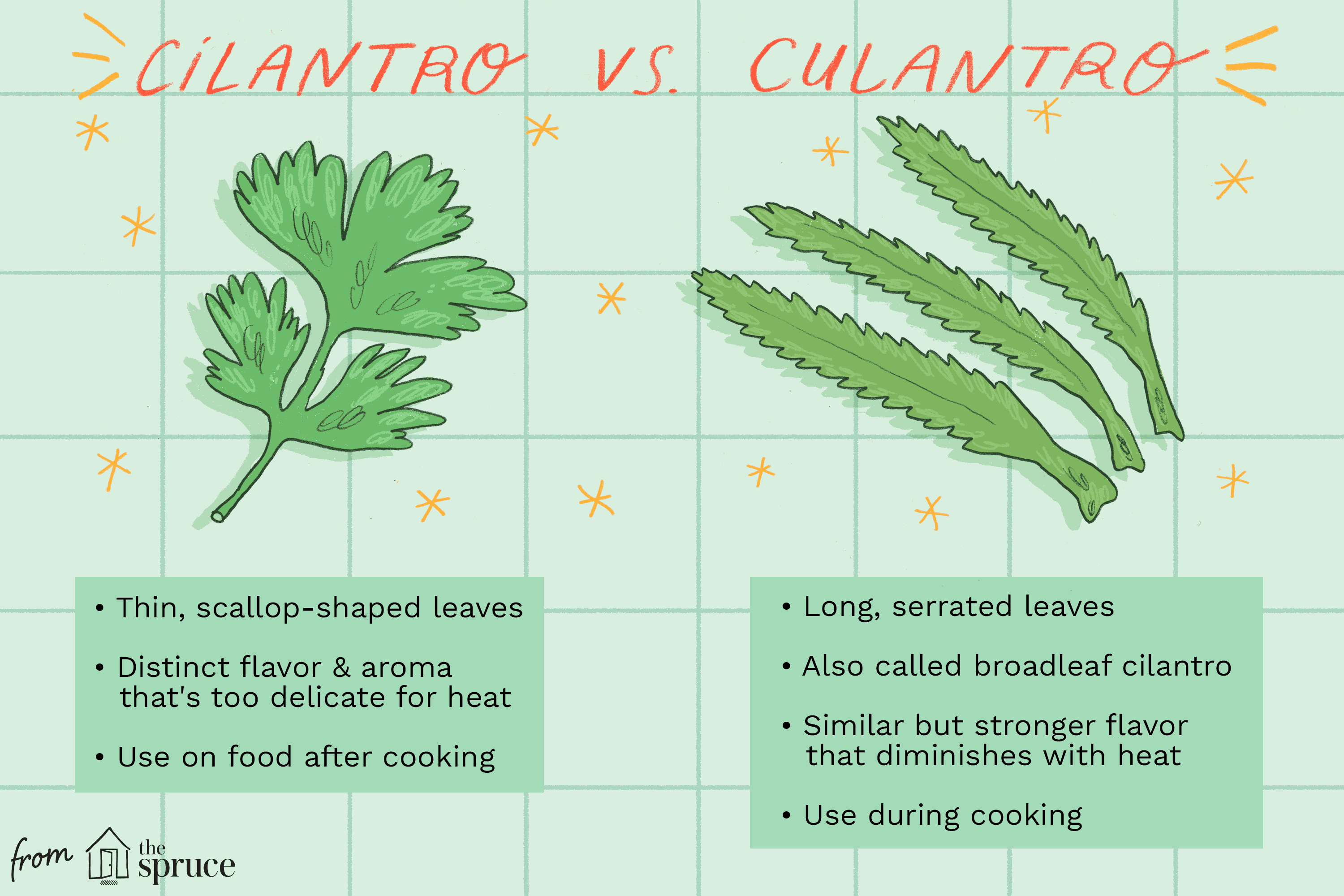 What Is Culantro and How Is It Used?