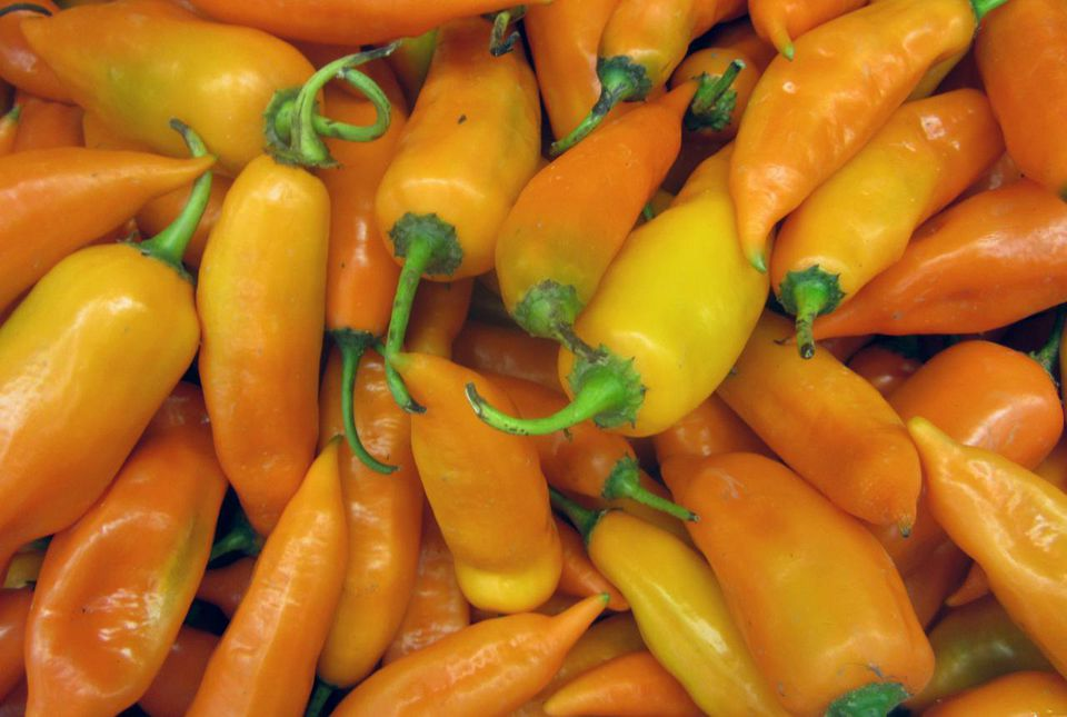 Aji Amarillo chile peppers