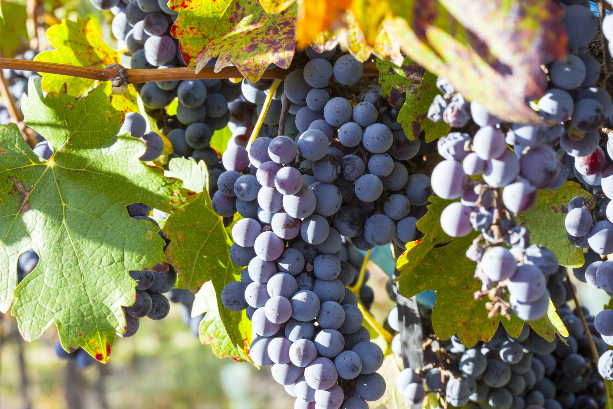 What Is Malbec Wine?