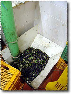 Olive Oil hopper