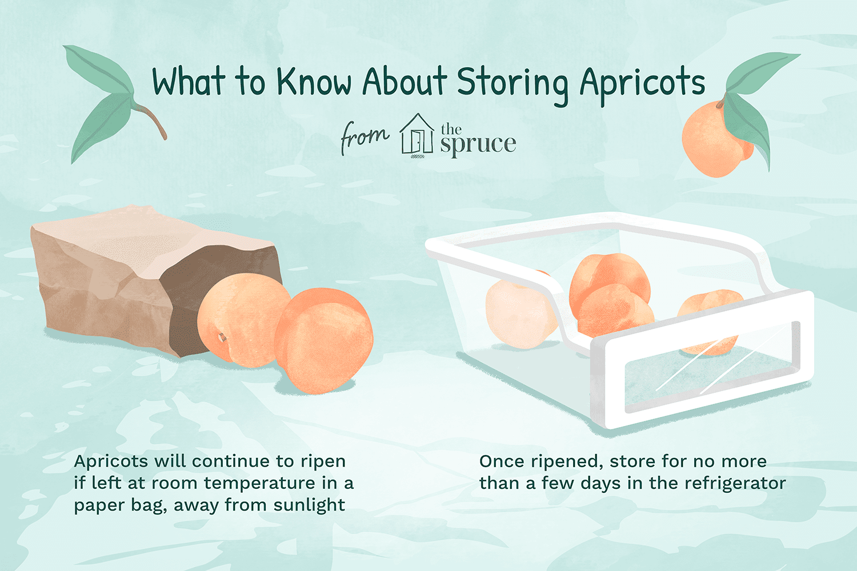 apricots illustration