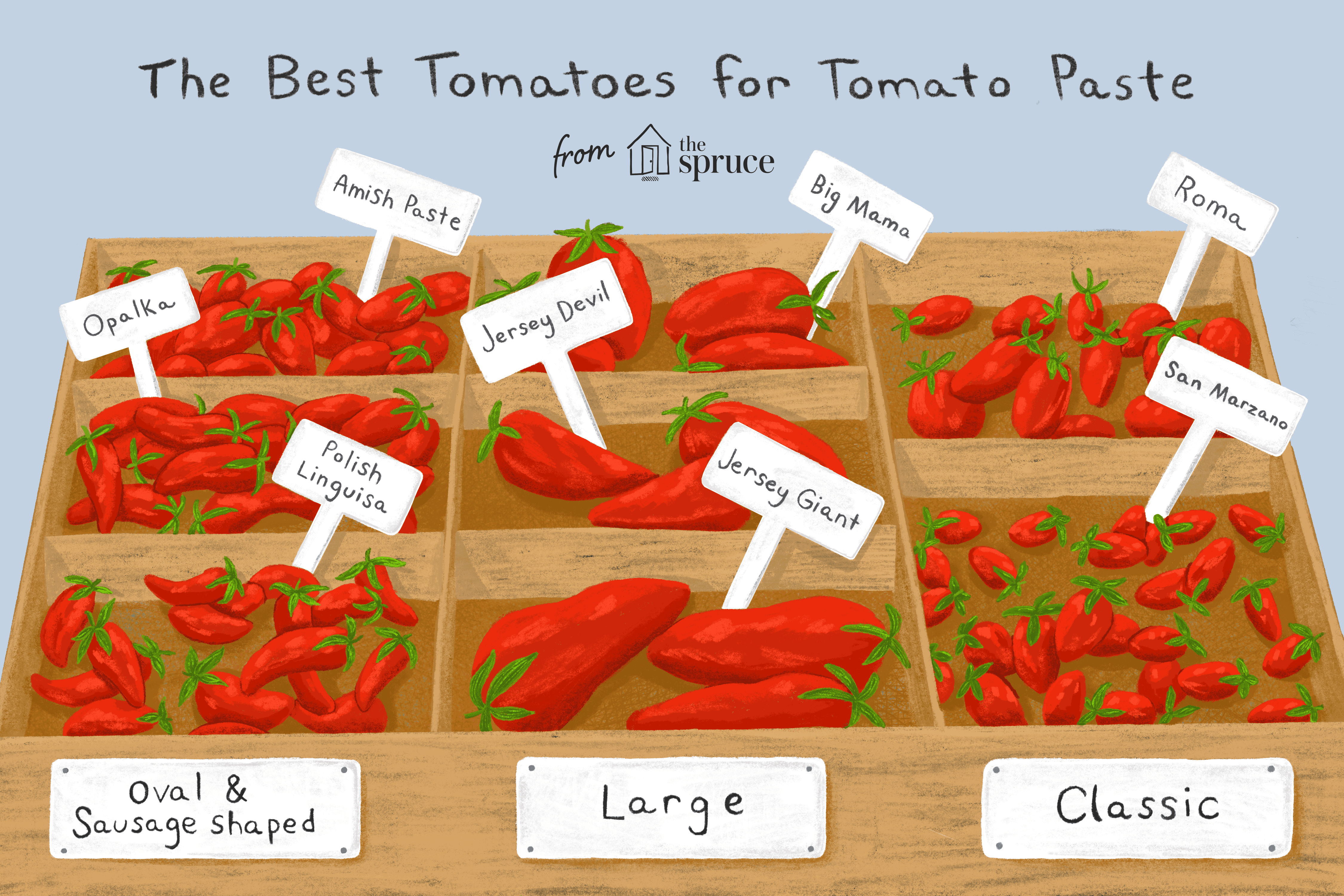 best tomatoes for sauce