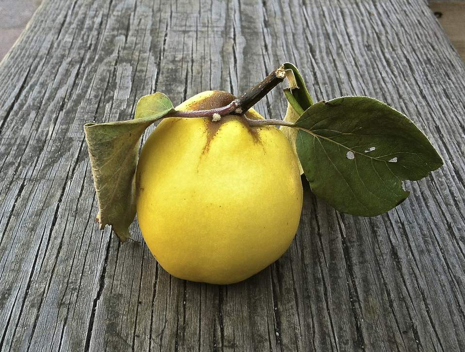 quince fruit on wooden table