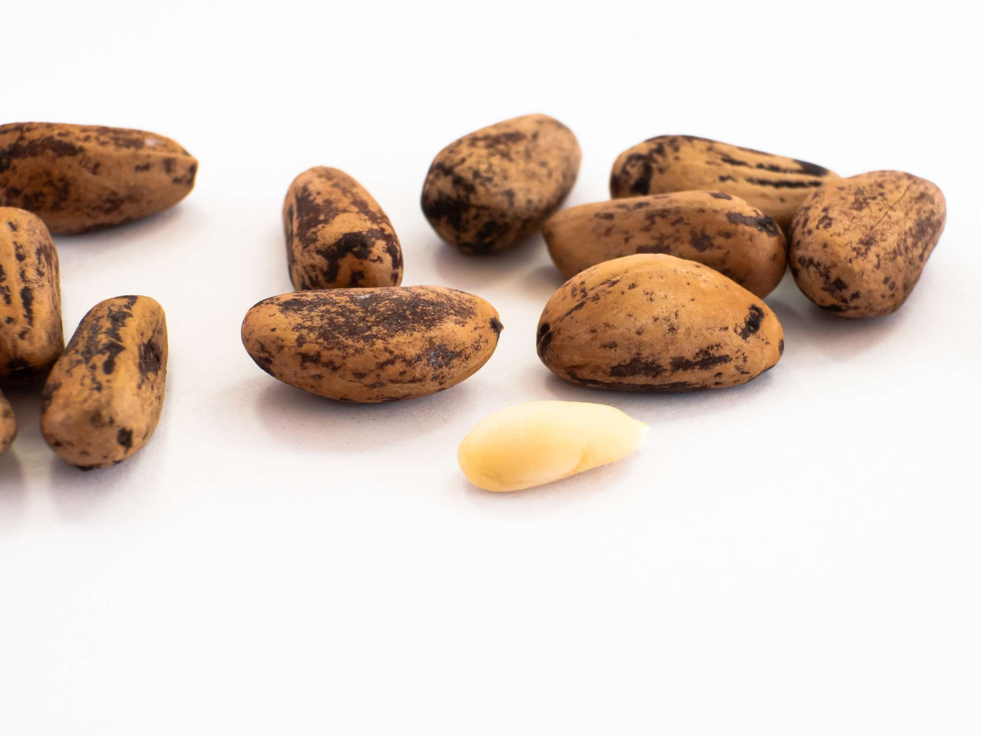 what are pine nuts