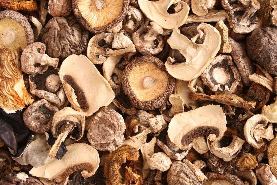 variety of dried mushrooms