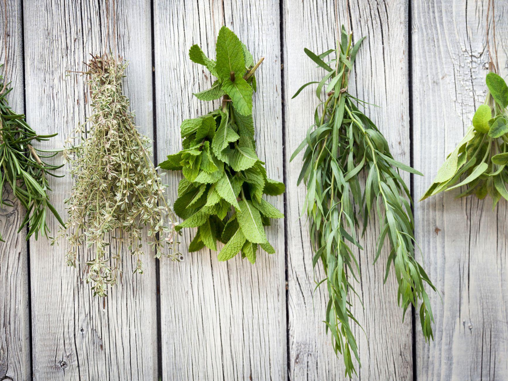 When to Use Fresh Herbs vs. Dried Herbs