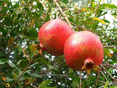 10 Symbolic Foods For Rosh Hashanah