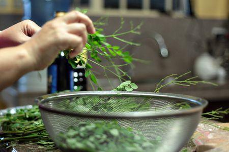 What Is Moringa Oleifera?