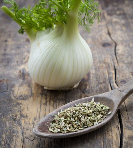 Fennel and fennel seeds
