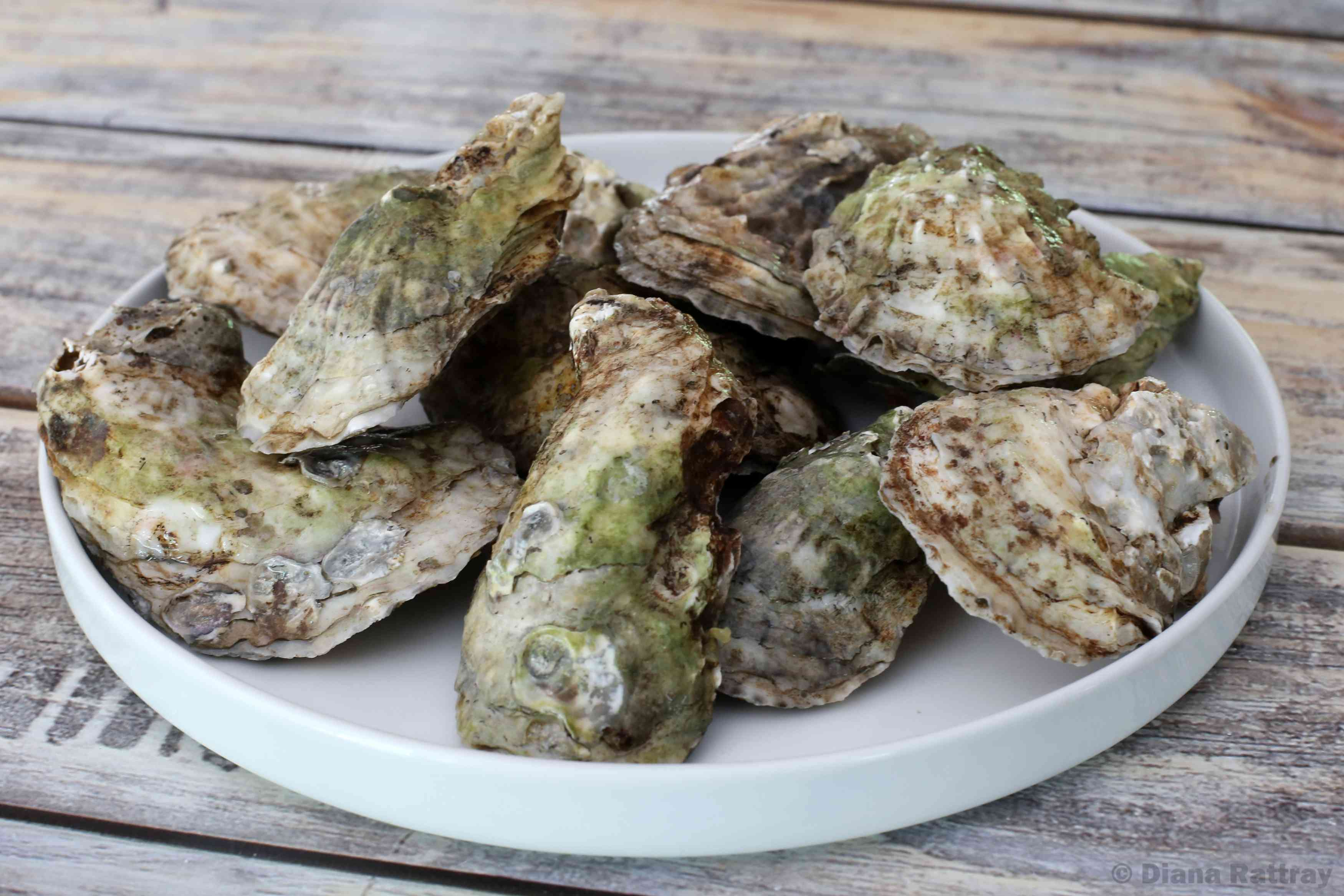 Fresh Oysters in the Shell