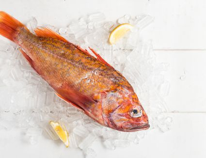 pacific rockfish