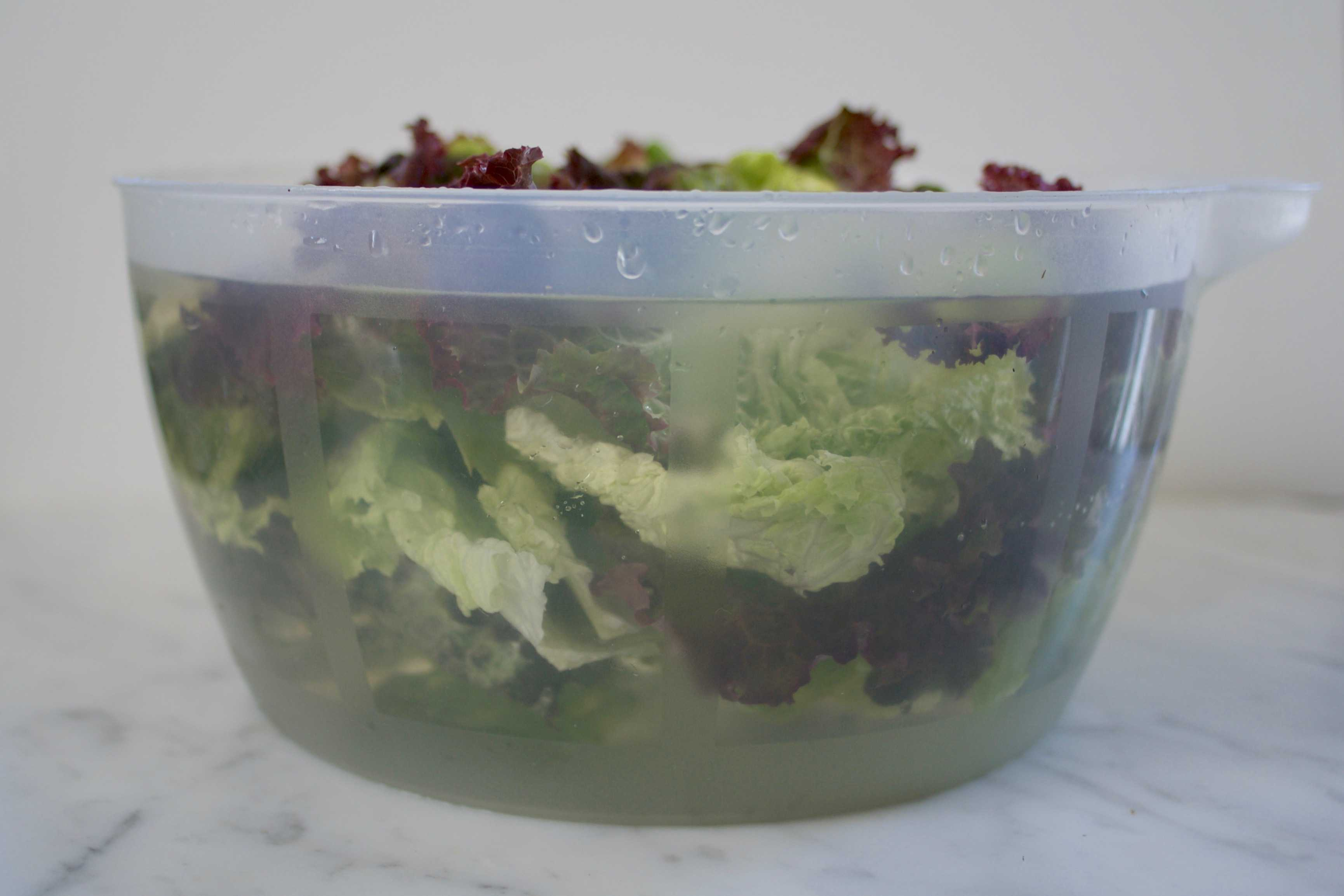 Lettuce in Water