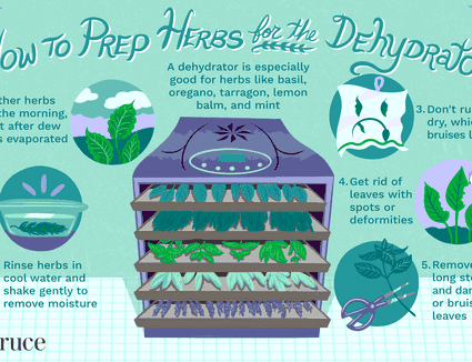 illustration showing tips on how to prep herbs for dehydrator