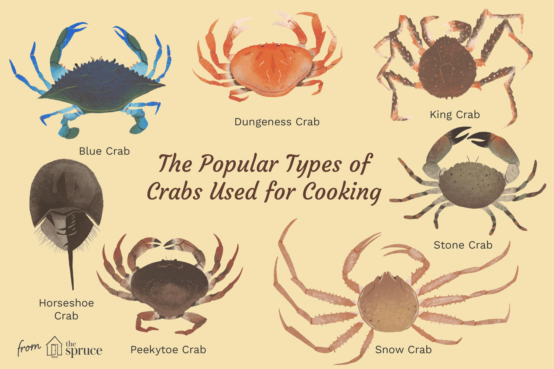 Edible Crab Varieties and Types