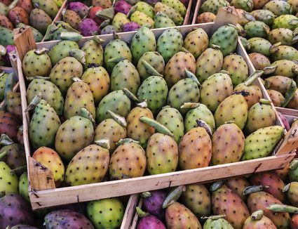 Prickly Pear Fruit on Display