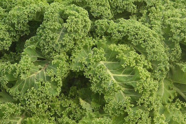 Kale - Gruenkohl
