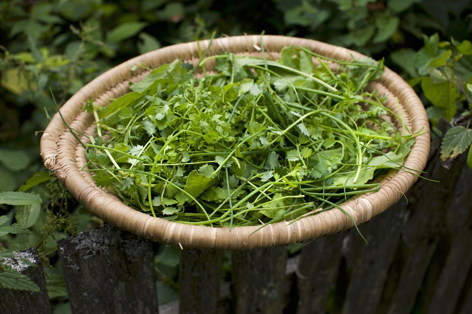 Fresh herbs in a woven basket on a garden fence