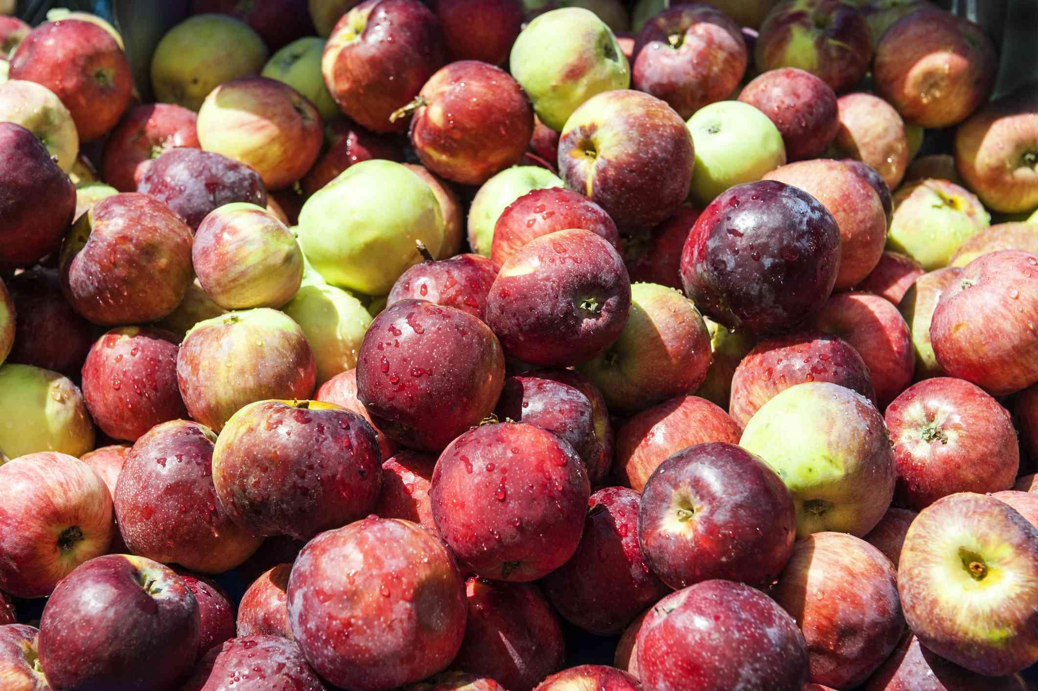 Sierra Beauty Apples