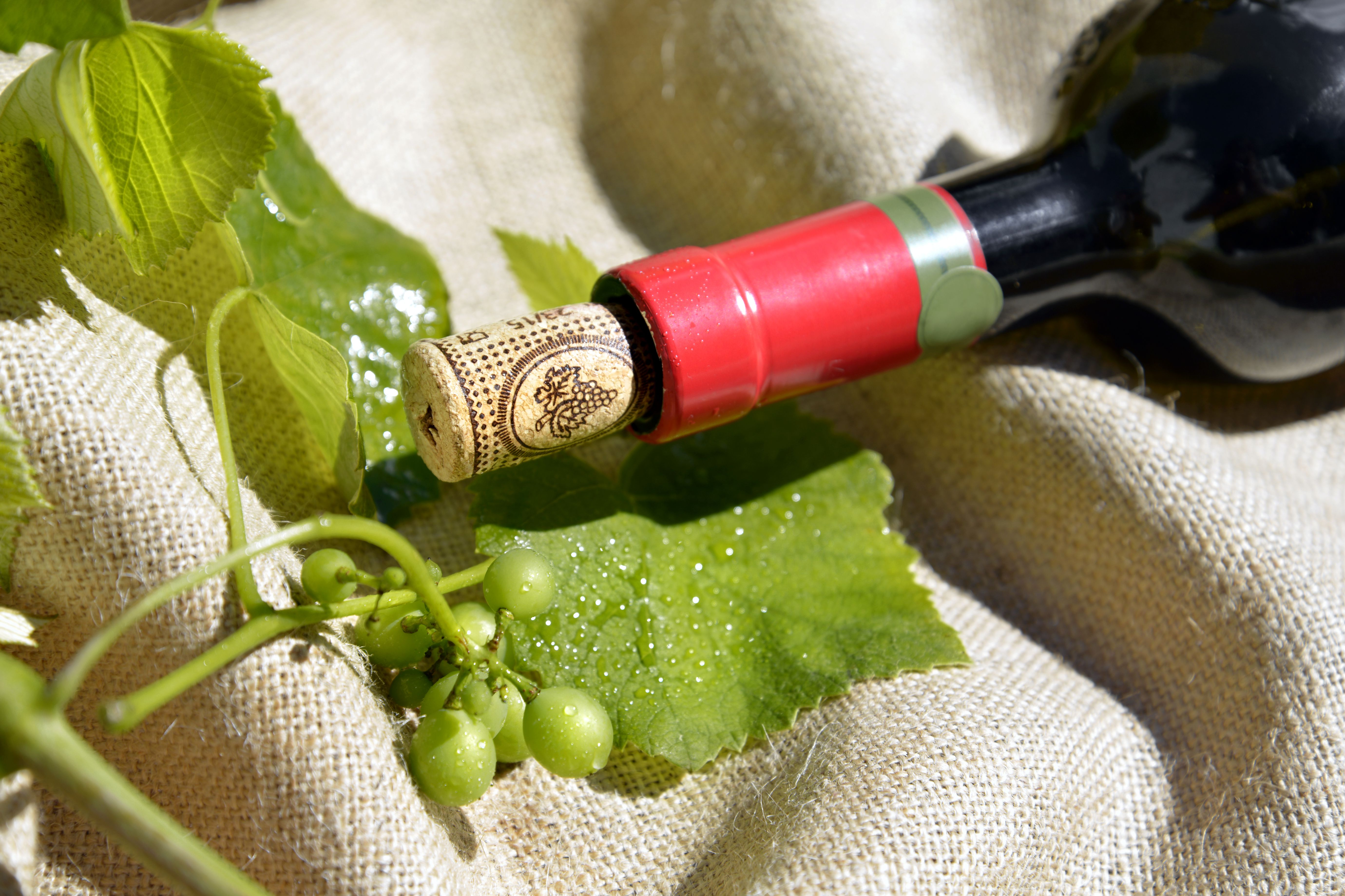 Bottle of red wine and vine leaves, Italy.