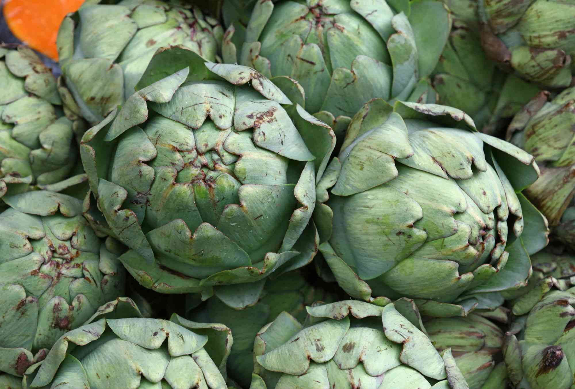 Close-up of fresh organic artichokes at market stall