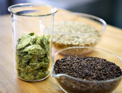 Barley, Hops and Wheat for Brewing Beer