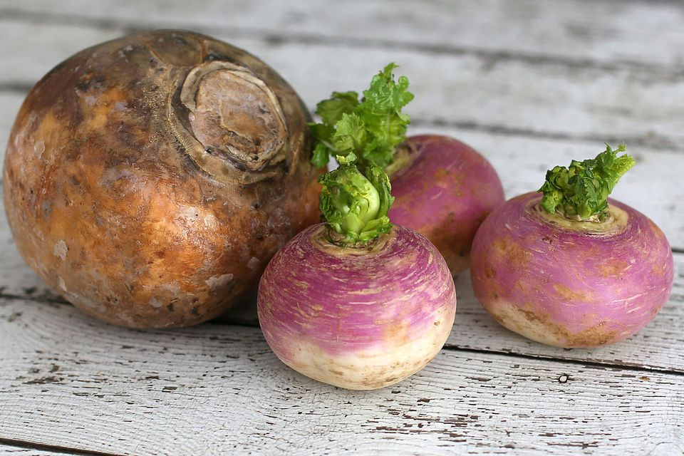 Rutabaga and Turnips