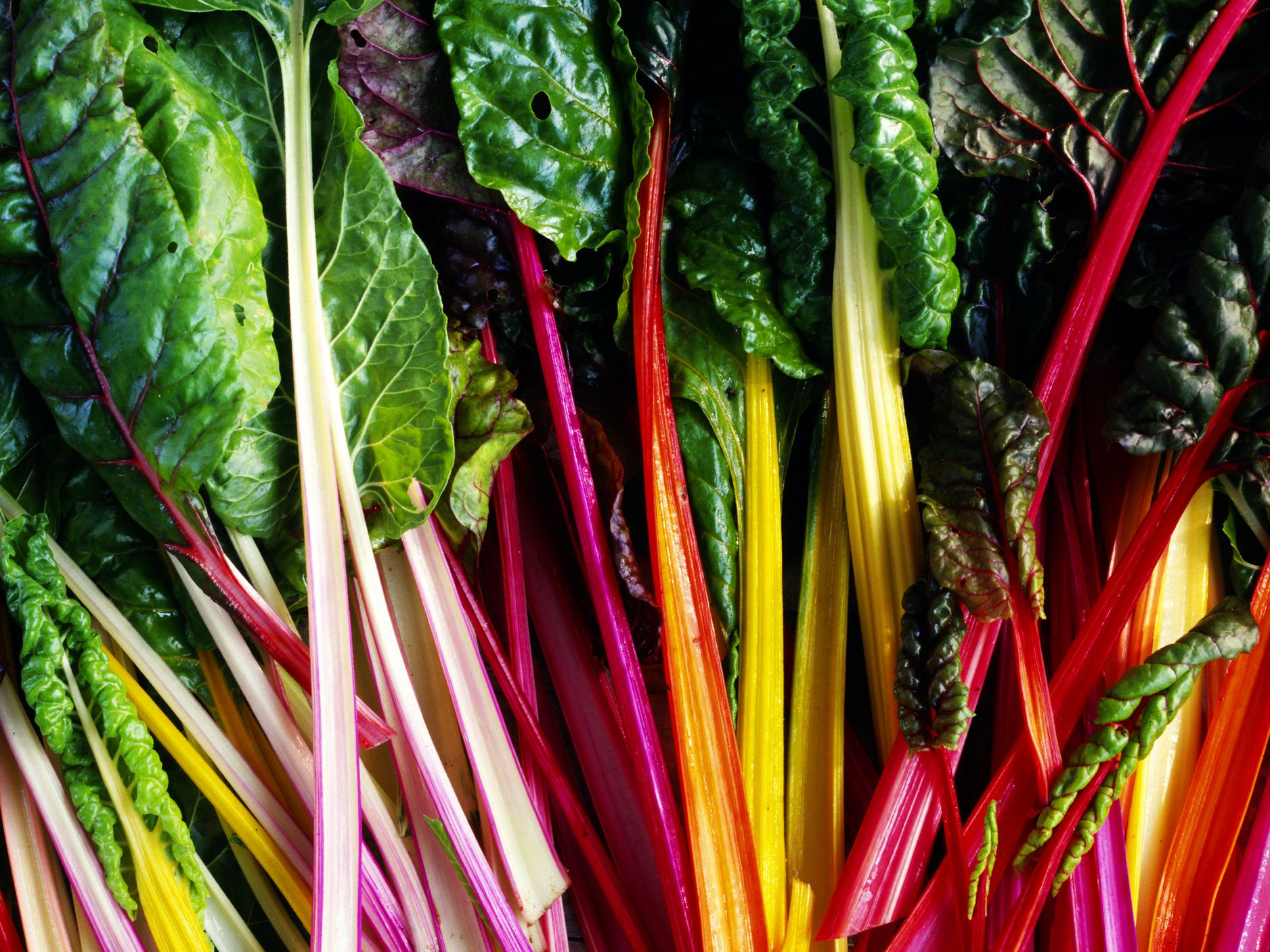 All About Colorful Rainbow Chard With Recipes