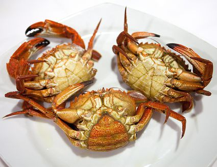 Female and Male Crabs