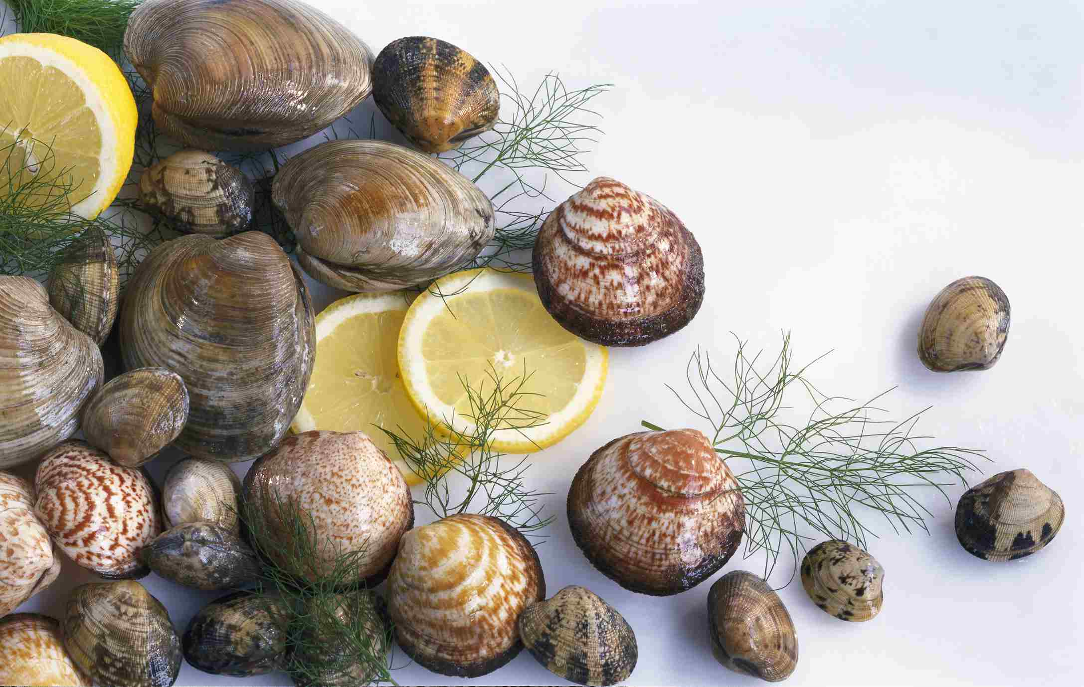 Different types of clams and cockles