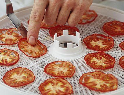 Taking dried tomato slices off a dehydrator shelf
