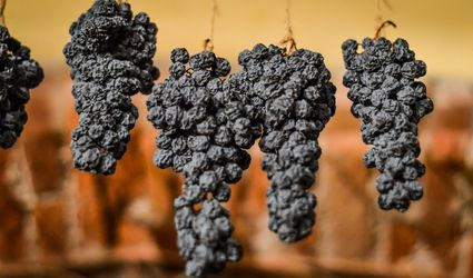 Corvina grapes drying for Amarone production