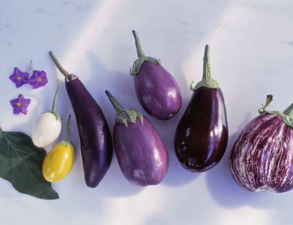 Different types of eggplants