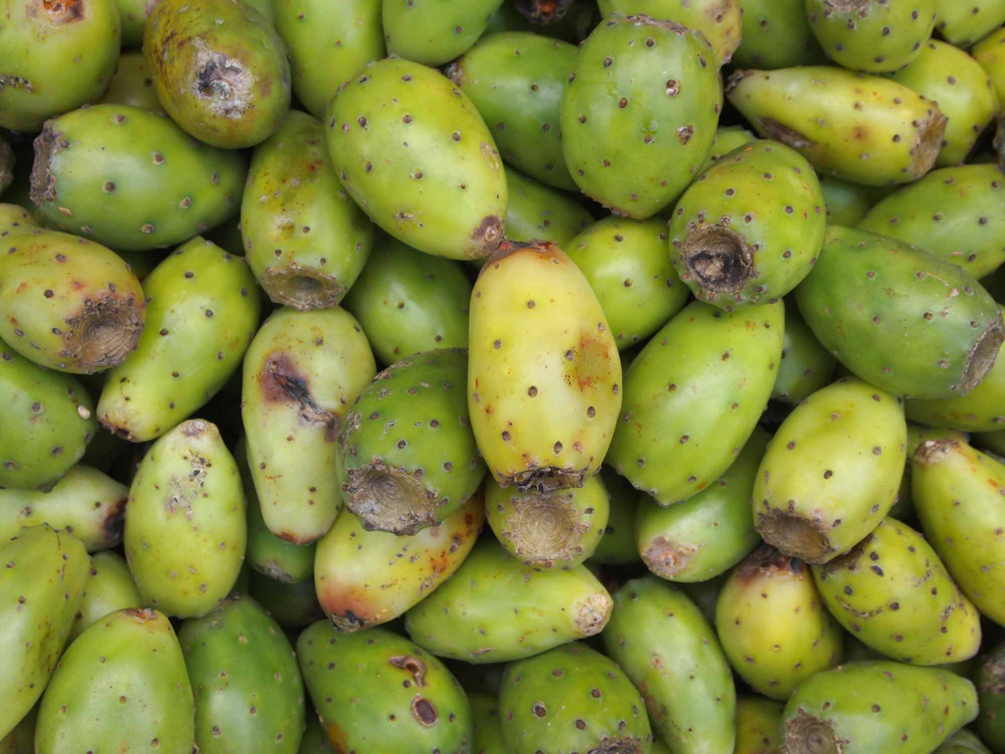 How to Harvest & Eat Prickly Pear Cactus Fruit