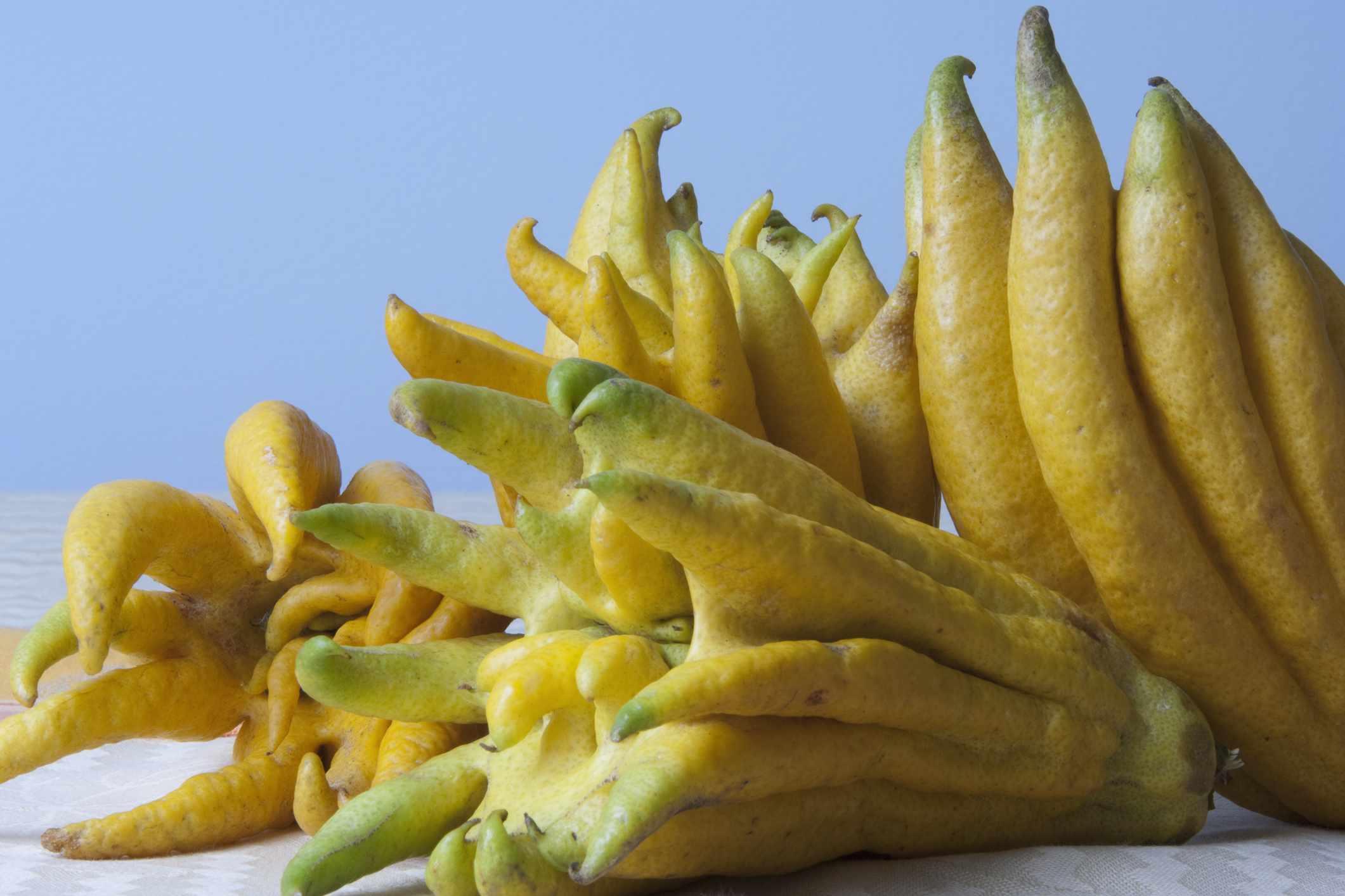 Fingered Citron