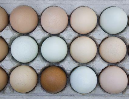Eggs in carton from various breeds, California, USA