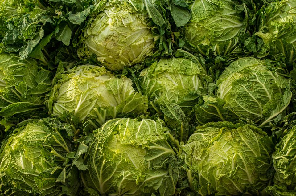 Many heads of crinkly-leaved savoy cabbage