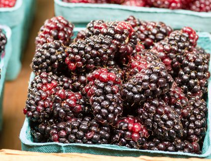 Marionberries in pint containers