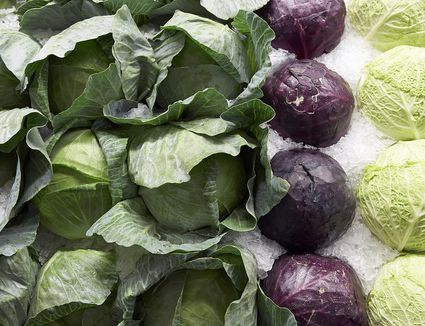 Many Types of Cabbages