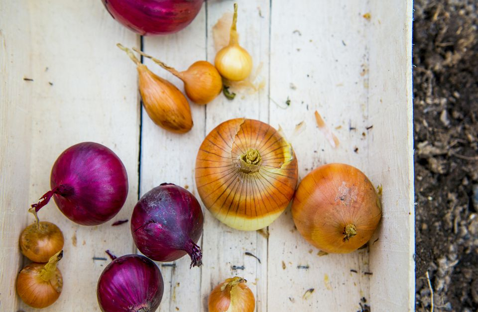 Crate of variety of onions