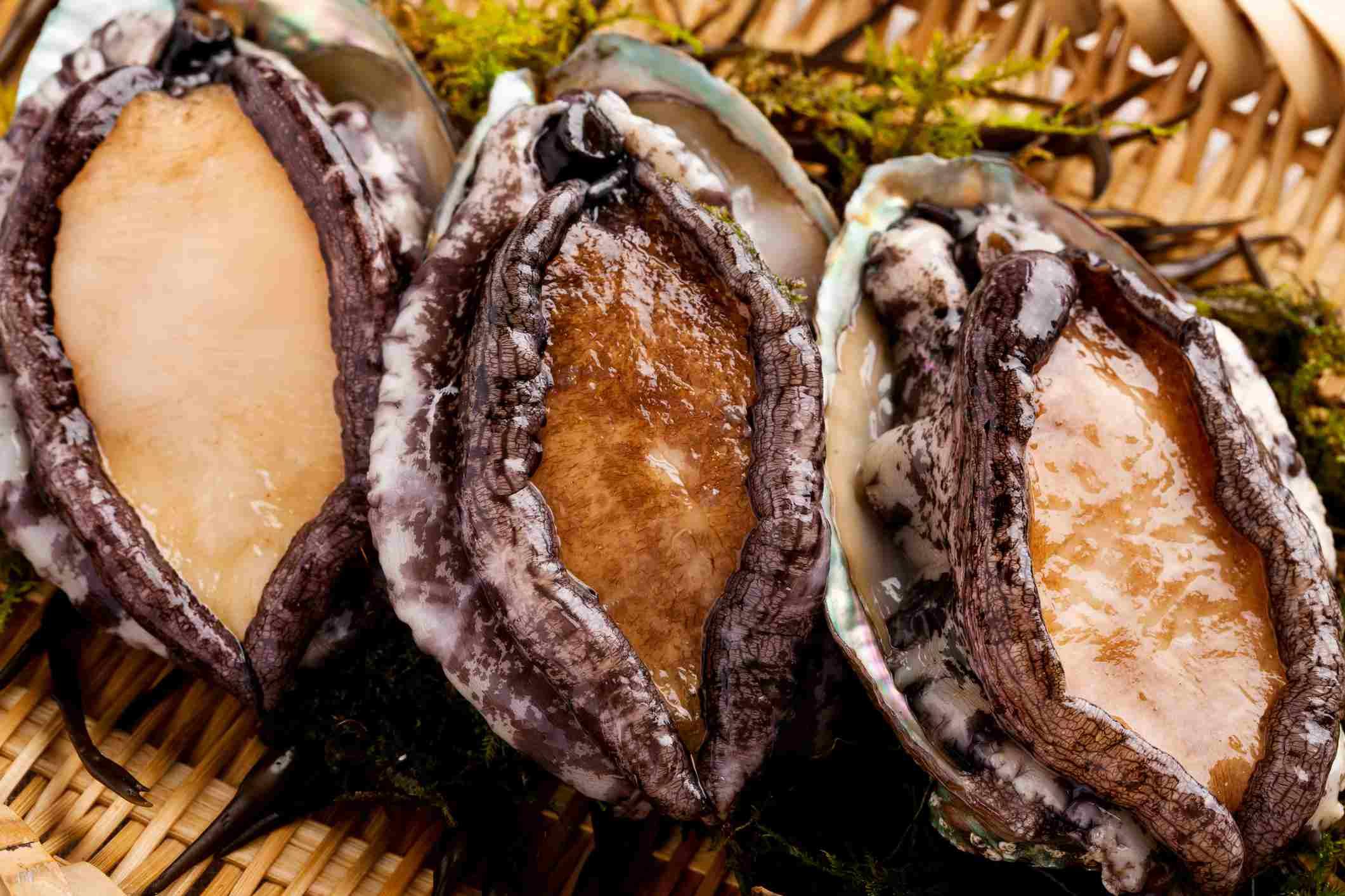 Fresh abalone clams