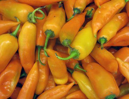 Aji Amarillo chile peppers