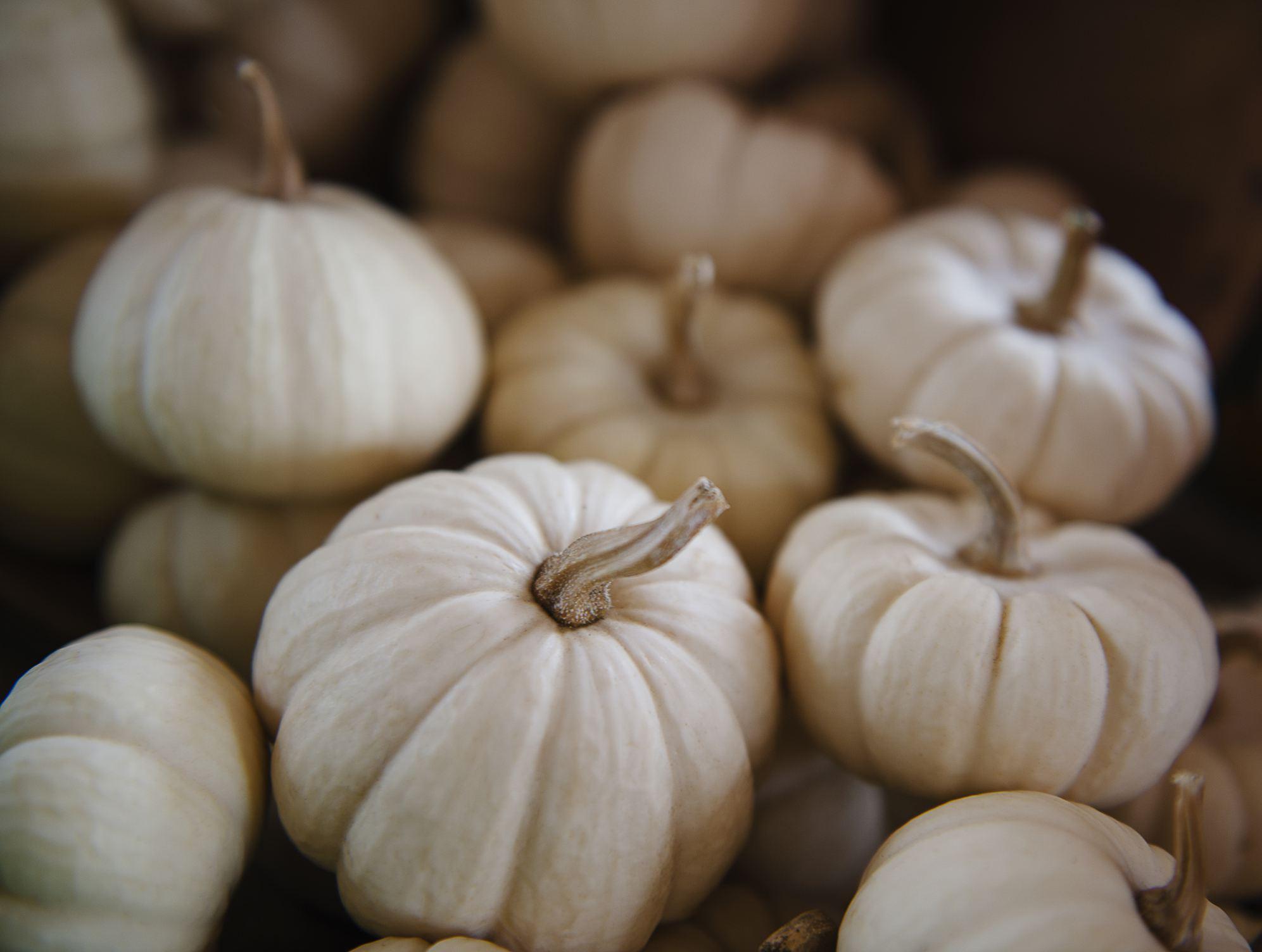 Small white pumpkins