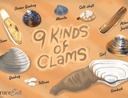 Types of clams